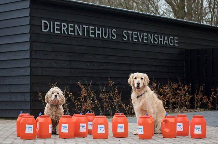Asielmedewerkers Lanzo en Teun ontfermen zich over de collectebussen van Dierentehuis Stevenshage.