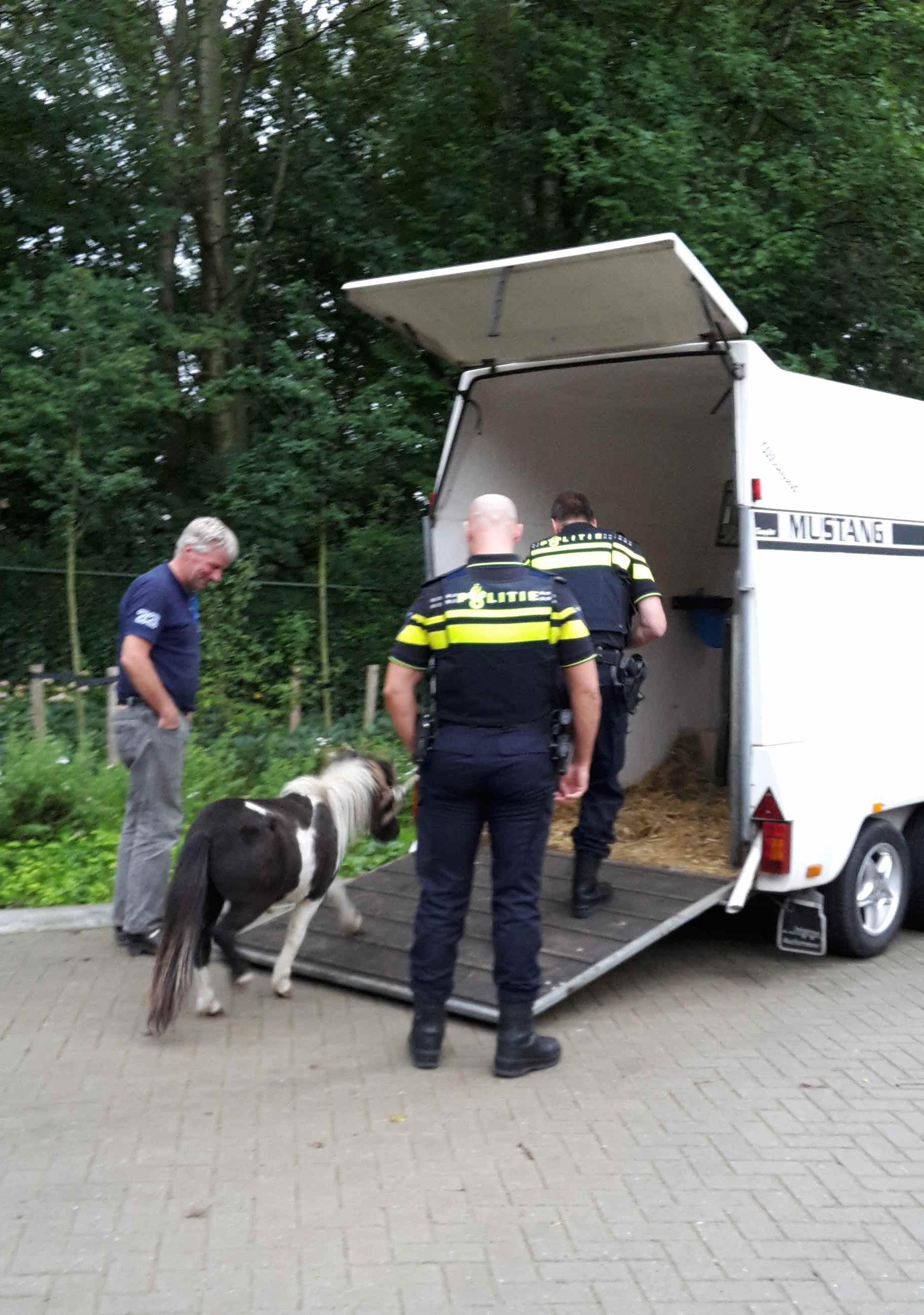 Een pony bij Dierentehuis Stevenshage in Leiden.