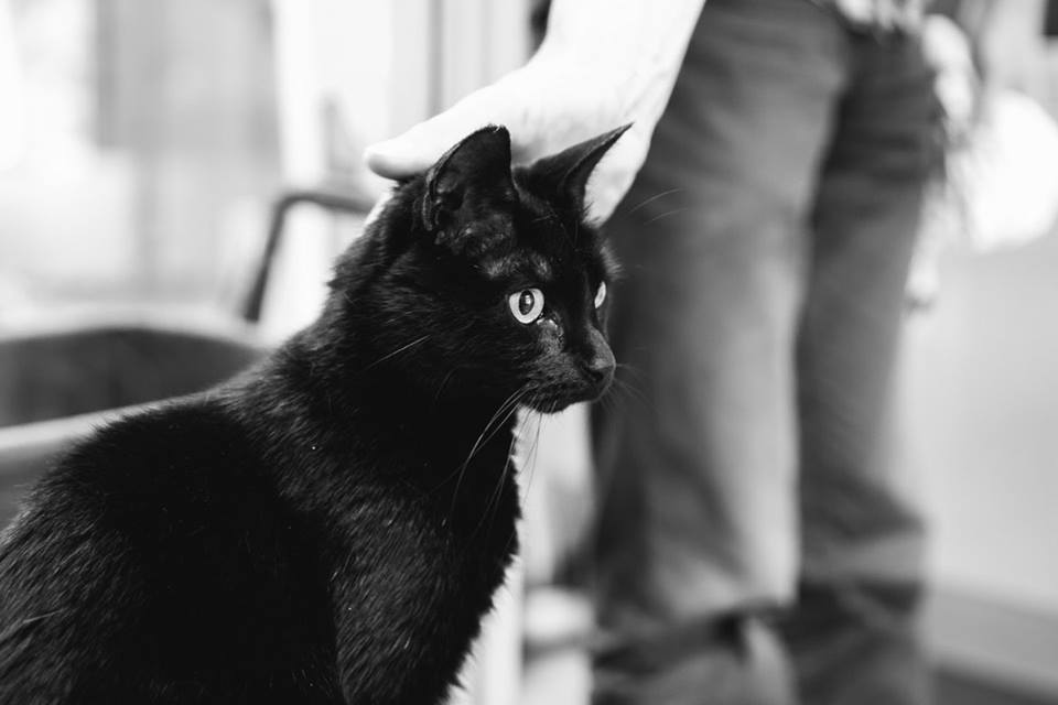 Werken in een dierenasiel gaat over dieren, maar ook over mensen. Foto: Sanne van de Berg van Dog Portraits
