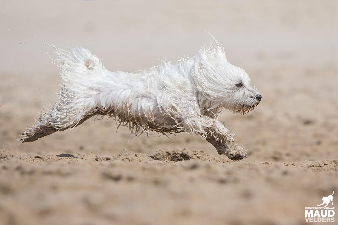 In de zomer van 2016 fotografeerde Maud Velders belangeloos tientallen honden op het strand van Noordwijk. De volledige opbrengst was voor de asieldieren van Dierentehuis Stevenshage in Leiden.