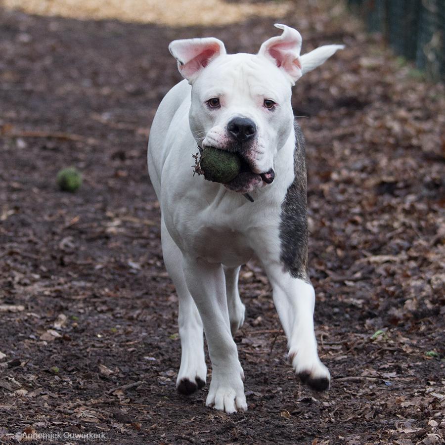 Voor ieder dier zijn eigen, unieke aanpak. Ook voor asielhond Troy.