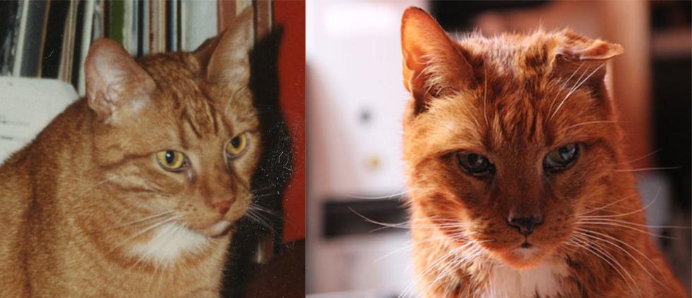 Ex-asielkater Tim toen Vilan hem adopteerde (links) en bijna 17 jaar later (rechts)