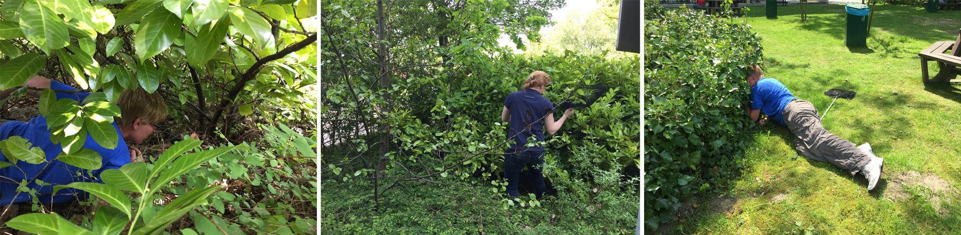 We ploeteren door de bosjes om de cavia te vinden