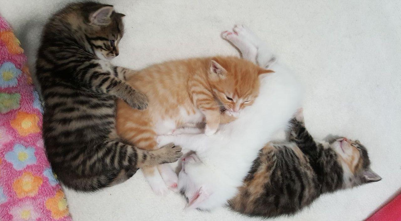 Kleurplaten Baby Katjes.Intussen In Het Asiel Kittens Dierentehuis Stevenshage