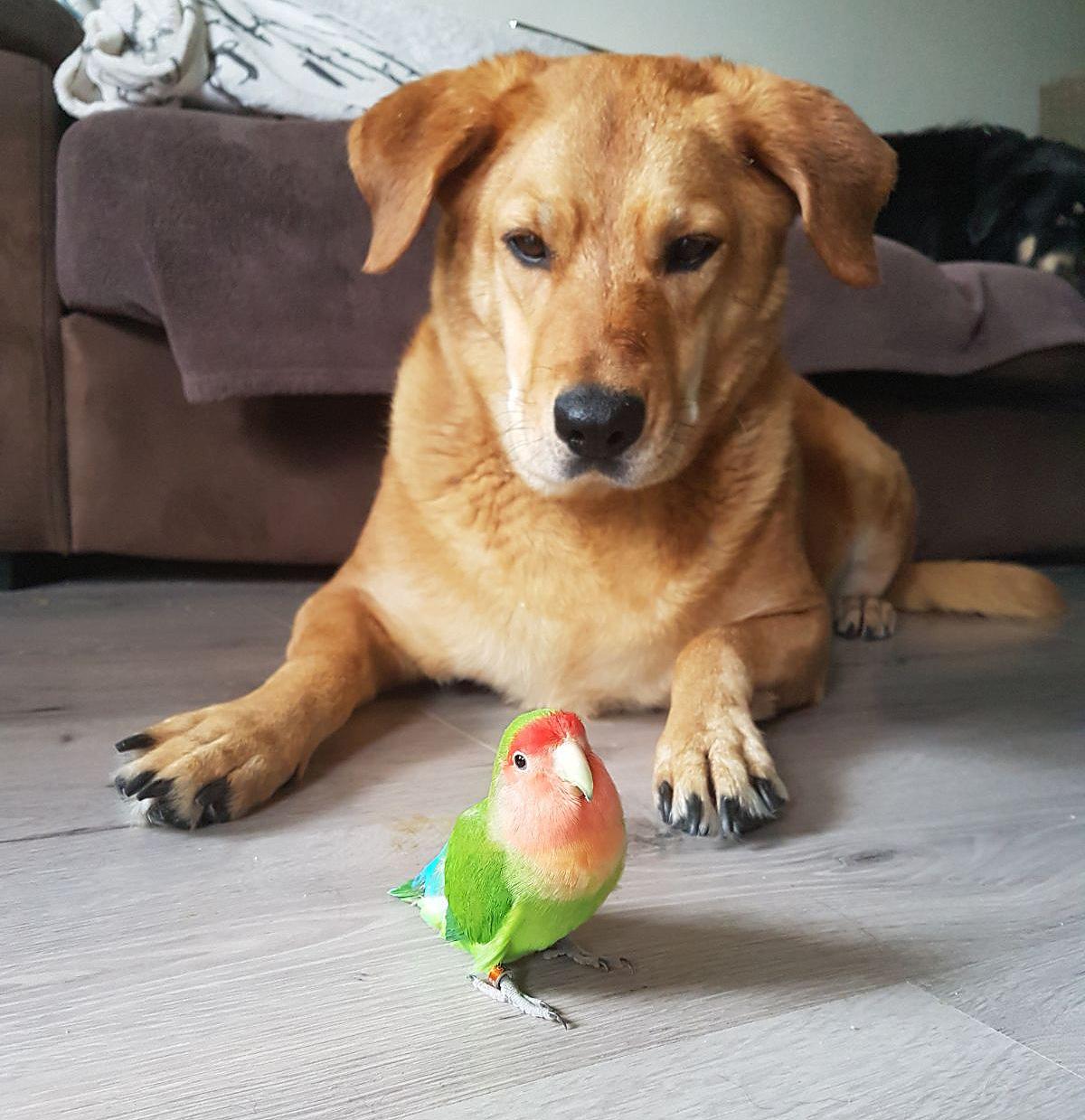 Hond Lana (verpleegster in spé) houdt kleine Rambo goed in de gaten