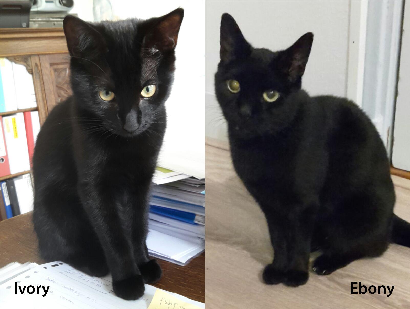 Klik om meer te lezen over asielkatten moeder Ebony en haar dochter Ivory.
