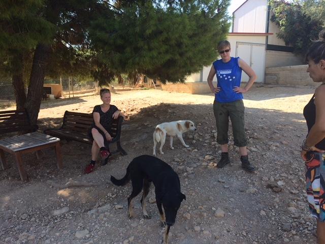 Dierenverzorgser Marlies en vrijwilliger Laura helpen in hun vakantie bij een asiel in Griekenland.