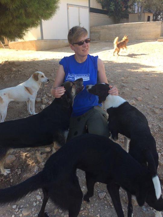 In Griekenland lopen de meeste honden los over het terrein van het asiel.