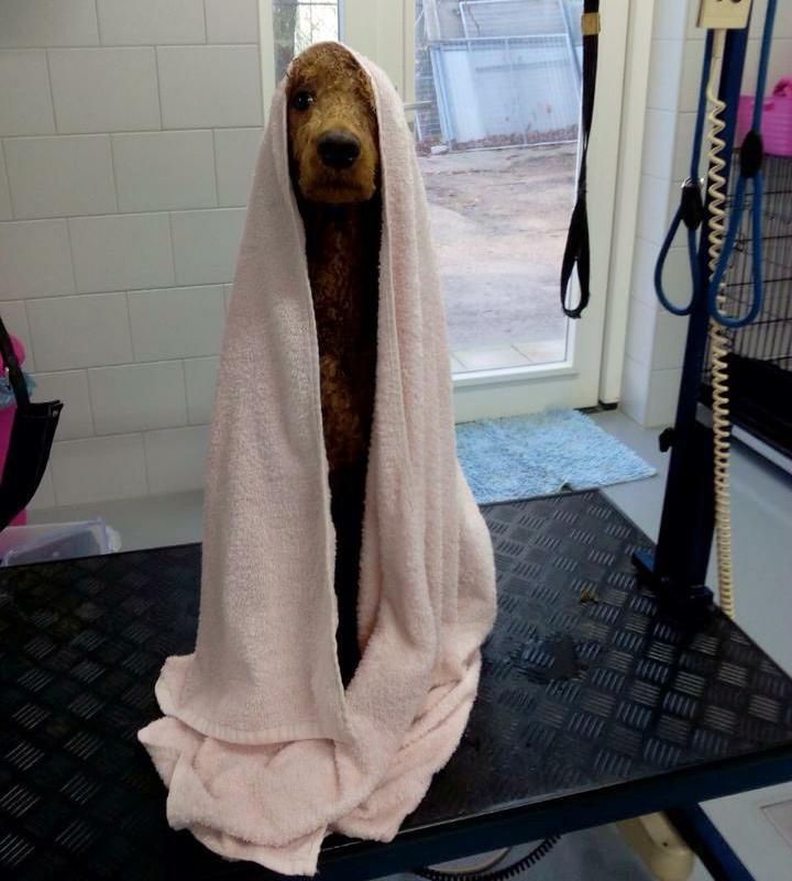 Ik begin de ochtend graag met een warme douche. Daarna lekker afdrogen.