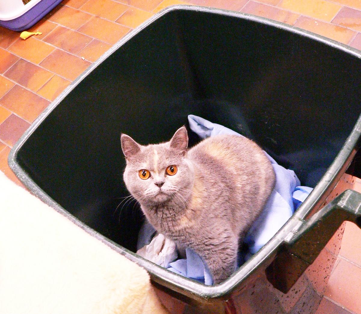 Wat is dit? Jullie hebben mijn favoriete dekentje bij het afval gegooid...
