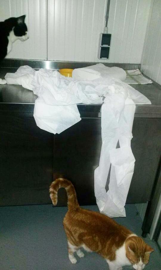 Wij zorgen voor het papier om mee schoon te maken. Kleine moeite.