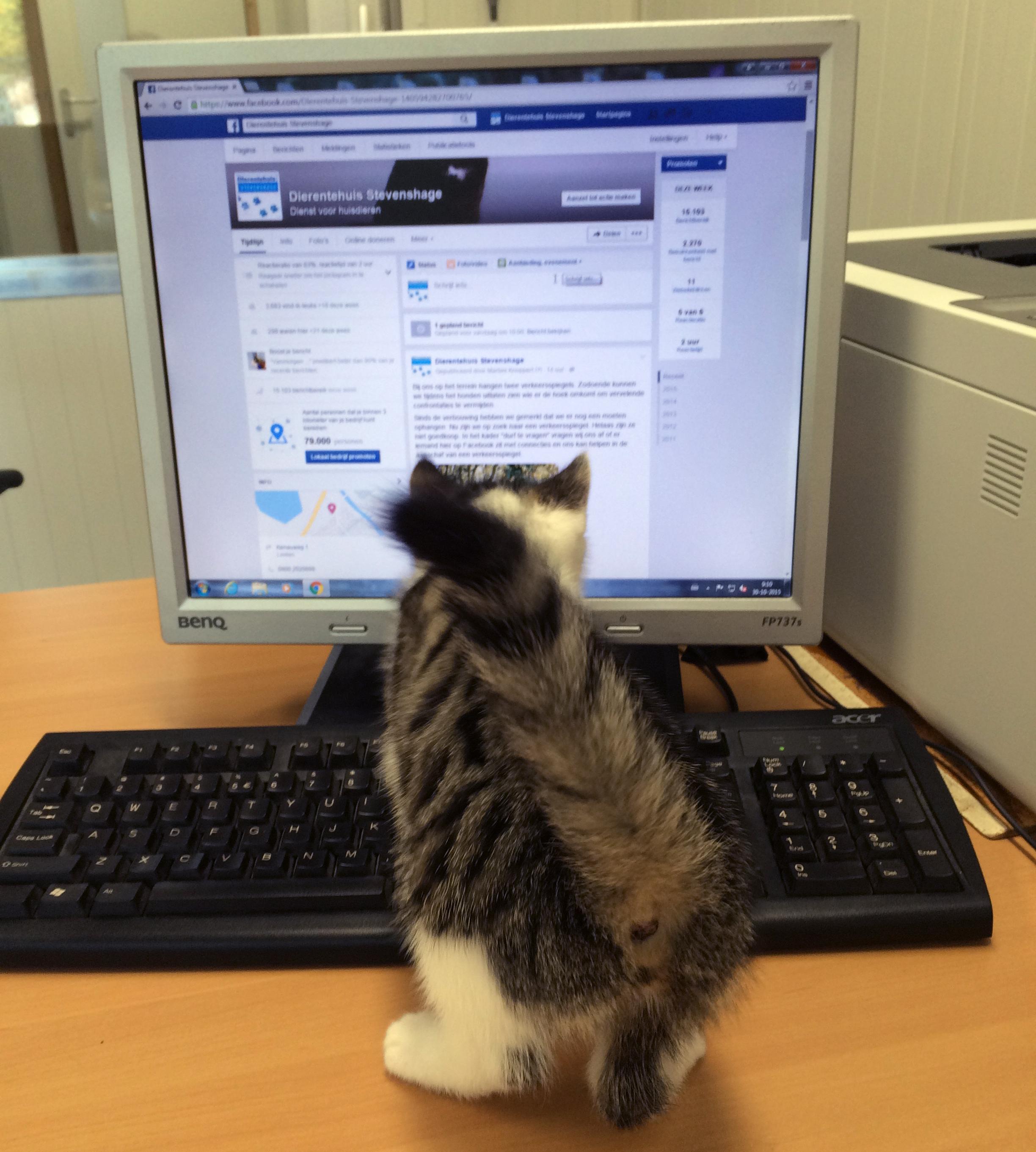 Ik help jullie wel even met Facebook. Hmm, wat gebeurt er als ik op het delete knopje druk...
