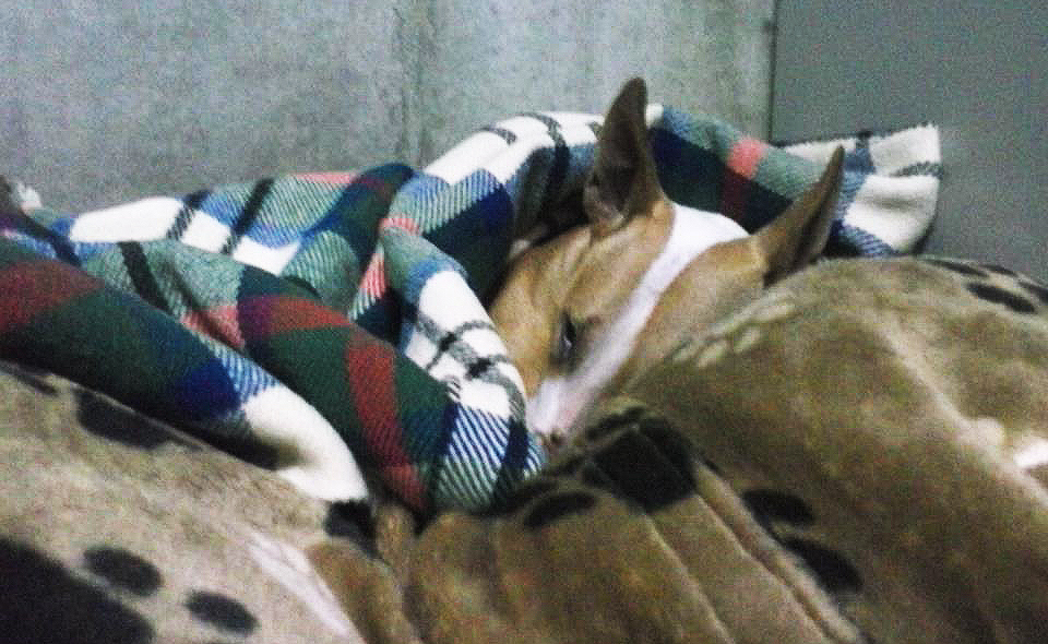 Mmm, nog even lekker langzaam wakker worden in mijn warme bedje...