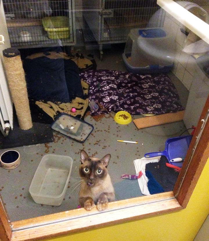 Wat ben ik blij dat de nacht voorbij is. Er was vannacht een plaatselijke orkaan op mijn afdeling. Ik was kansloos!