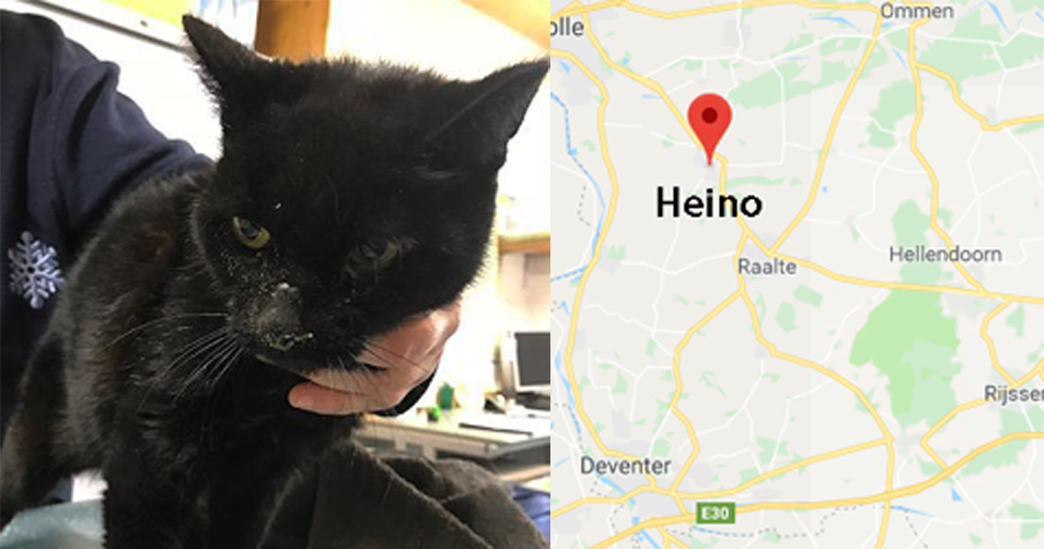 Intussen in het asiel: Heino