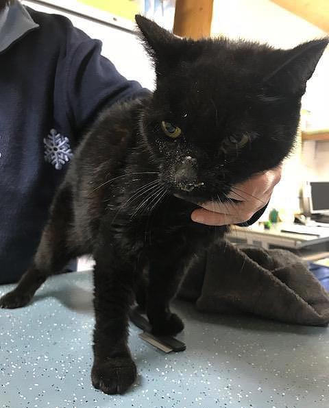 Zwarte kater Heino wordt in zorgelijke toestand gevonden en naar de dierenarts gebracht.