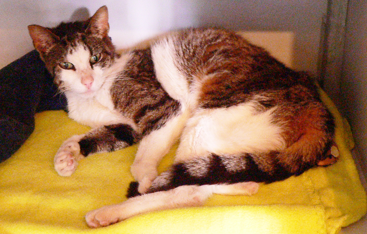 Poes Lara wordt door dierenarts Roel op basis van haar lichamelijke toestand minstens 14 geschat, maar blijkt volgens haar chip pas 6 jaar oud.