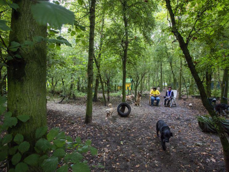 Het hondenbos van Dierentehuis Stevenshage, waar honden worden uitgelaten en getraind.