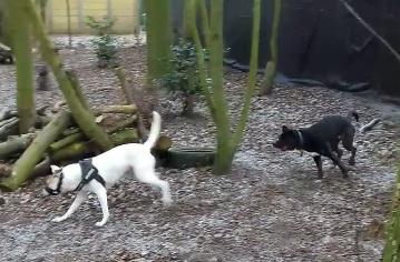 Klik op de afbeelding om de video van Nikki en Shadow te zien