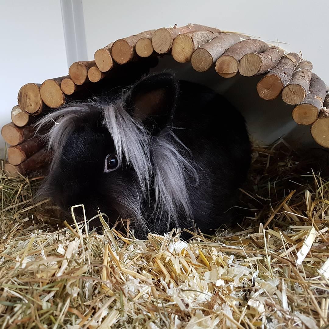 Asielkonijn Bobbie kruipt lekker weg in zijn speelhuisje.