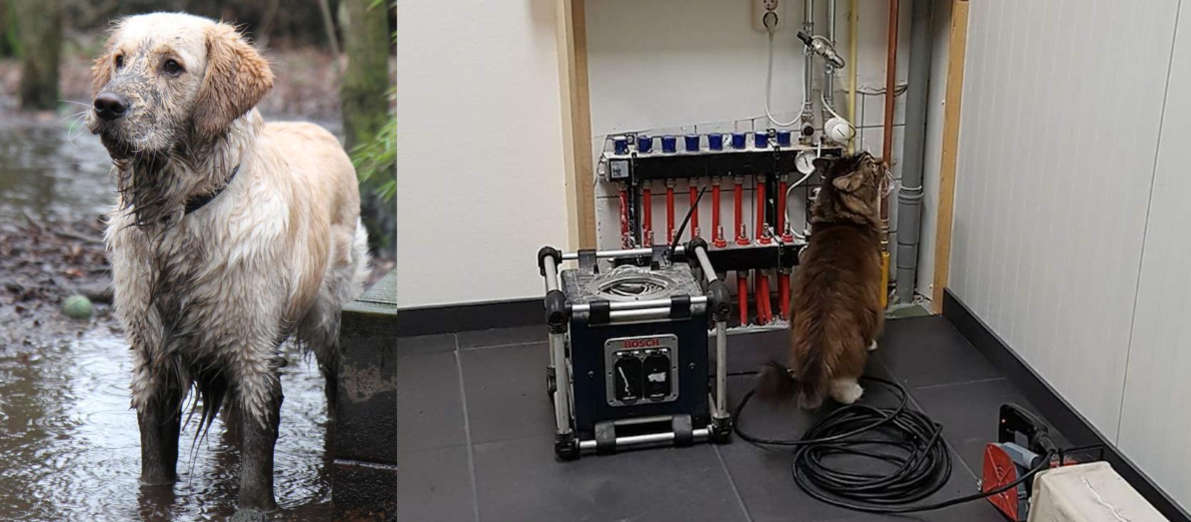 Hond Teun en kater Tobias zijn van het Facility Management bij Dierentehuis Stevenshage