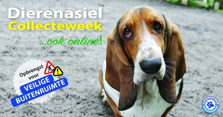 Doneer online voor veilige buitenruimte bij Dierentehuis Stevenshage!