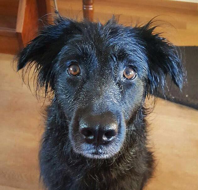 Naast konijnen heeft Corinne ook hond Phoebe, want iemand moet die ballen uit de zee halen!