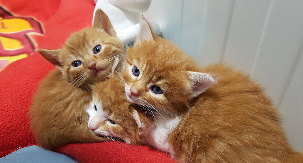 Bij de adoptie van kittens hanteren we een speciale procedure.