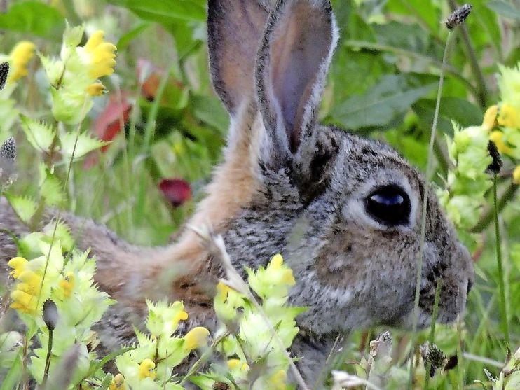 Gedumpte konijnen in Leiden Bio Science Park