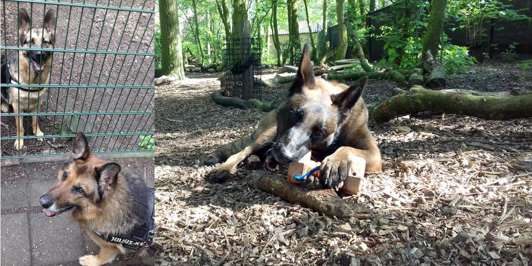 Herders Tom en Femke in het hondenbos van Dierentehuis Stevenshage