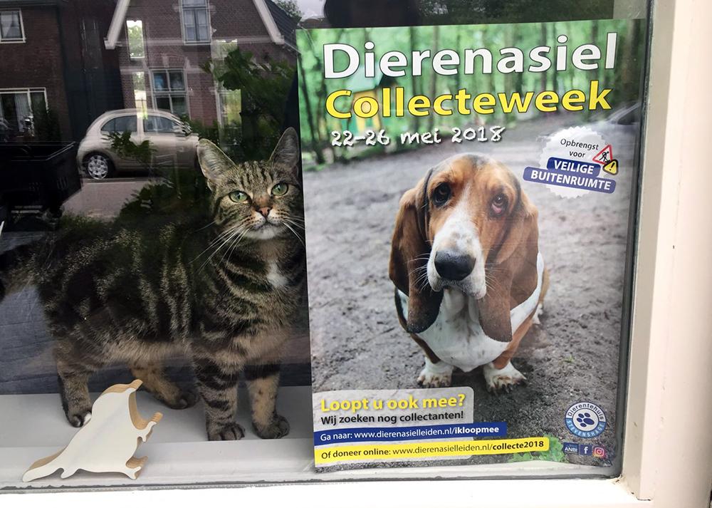 Als ik thuiskomt poseert mijn eigen kat Jackie keurig naast de colleceposter van Dierentehuis Stevenshage.