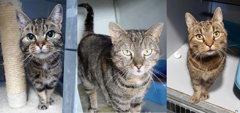 Zou u uw cyperse kat herkennen na twee maanden zwerven? Helemaal rechts ziet u Dounja, die nog een nieuw baasje zoekt. Klik op de afbeelding voor meer informatie.
