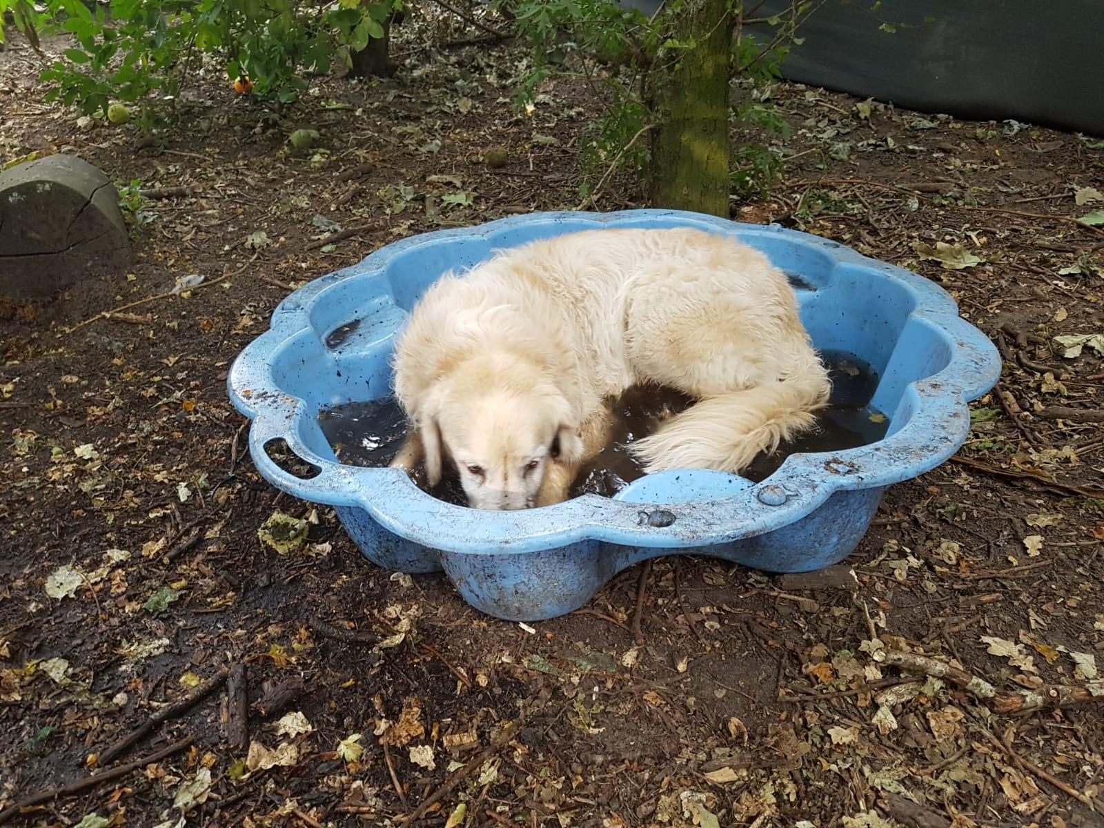 De kikkerbadjes in het hondenspeelbos zorgen voor wat broodnodige verkoeling tijdens de hitte.