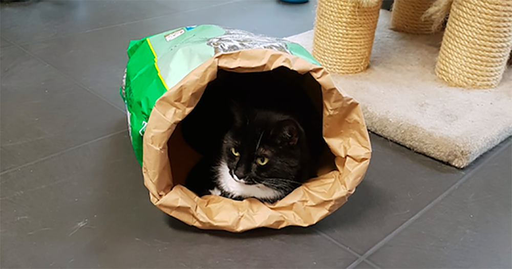 Verstoppertje spelen in een lege zak kattenbakvulling is een favoriet spel bij veel pensionkatten.