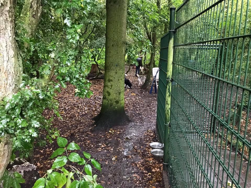 Een kijkje in het hondenspeelbos tijdens de Open Asieldag 2017