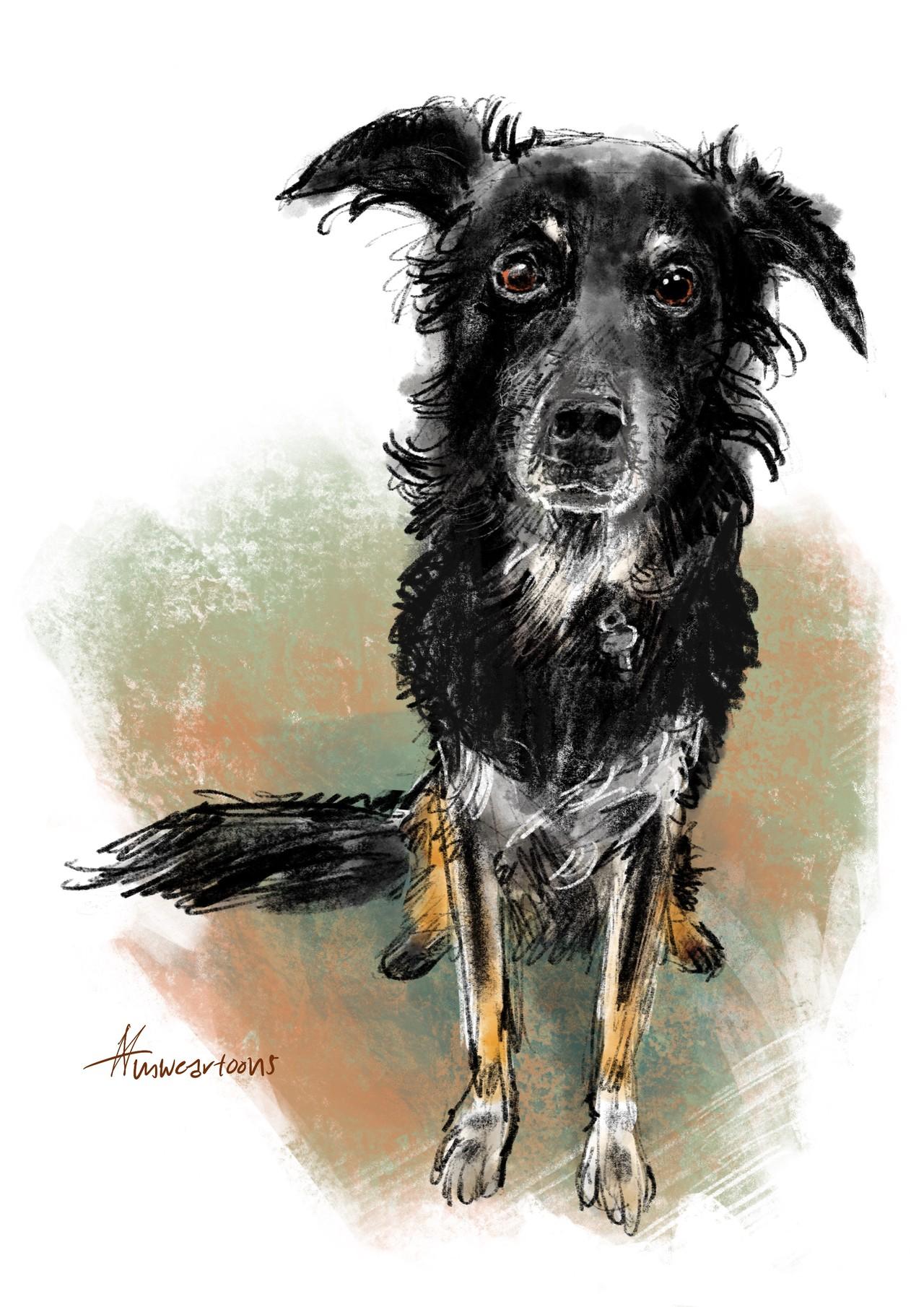 De jarige Norah van hondenverzorgster Marianne, getekend door Maarten Wolterink.