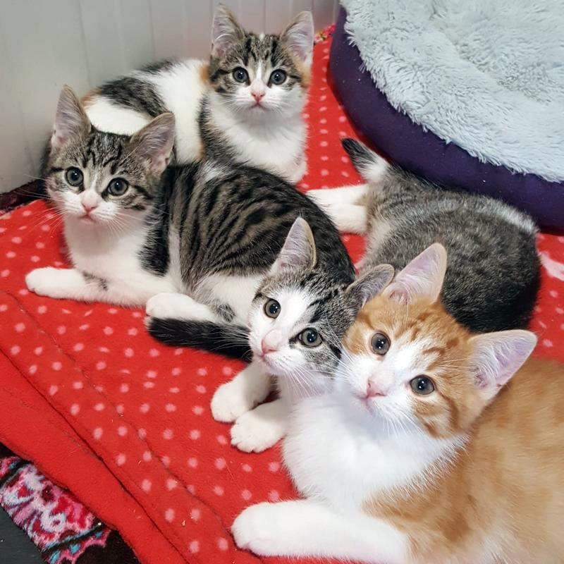 De kittens van moederpoes Jintha bij Dierentehuis Stevenshage.