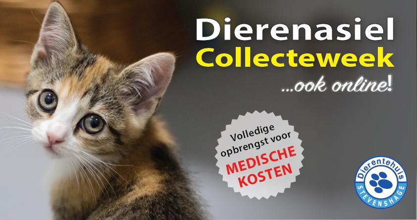 Geef voor de asieldieren tijdens onze online collecteweek!
