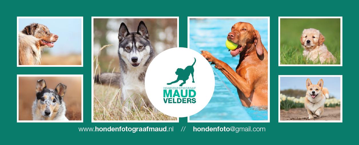 Hondenfotorgraaf Maud Velders steunt Dierentehuis Stevenshage in Leiden!