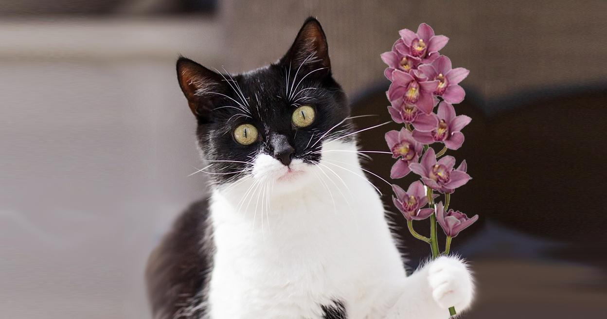 Intussen in het asiel: Orchideeën en katten