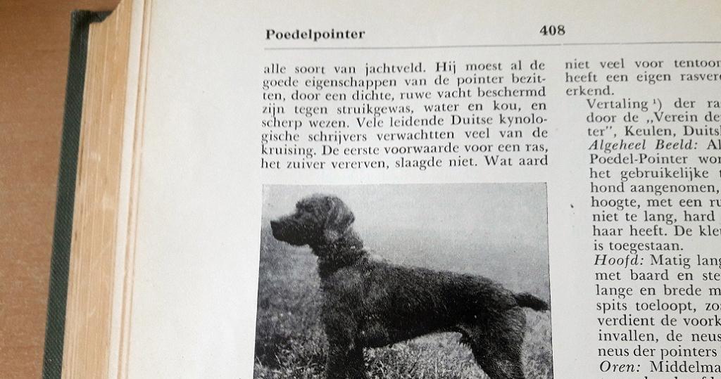 IN Toepoel's Hondenencyclopaedie die rond 1950 uitkwam staat een poedelpointer beschreven - een ras dat inmiddels verdwenen is.