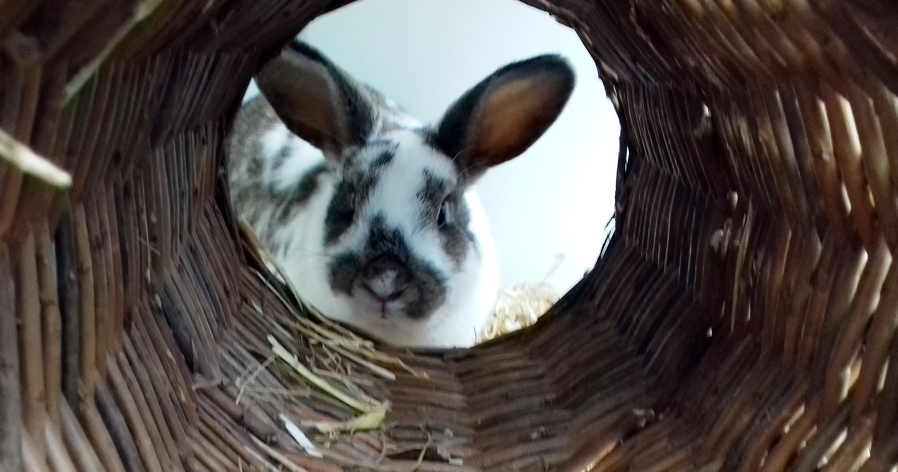 Intussen in het asiel: Bij de konijnen af