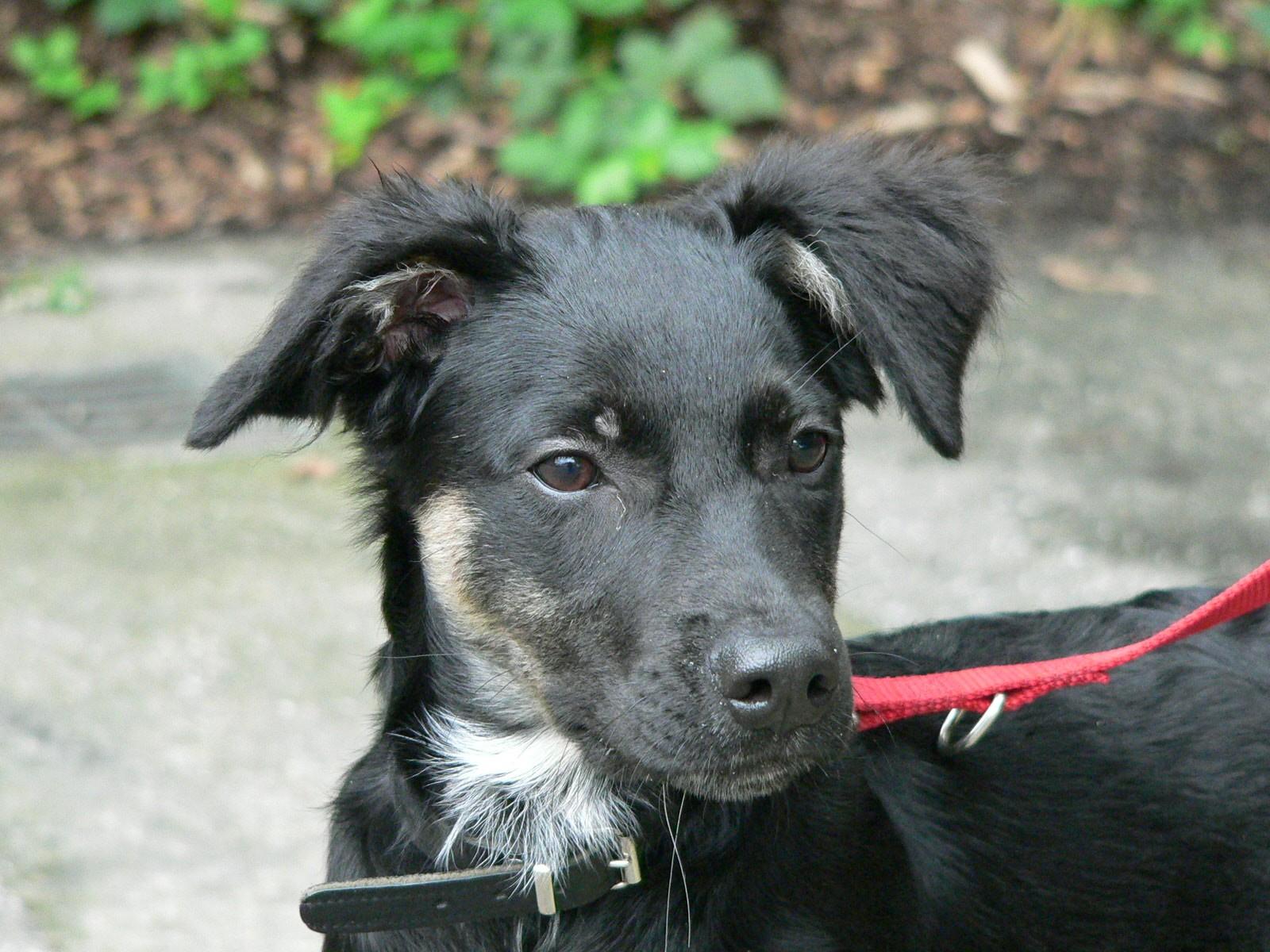 Hoera! Norah, de hond van Marianne, is dertien jaar geworden!
