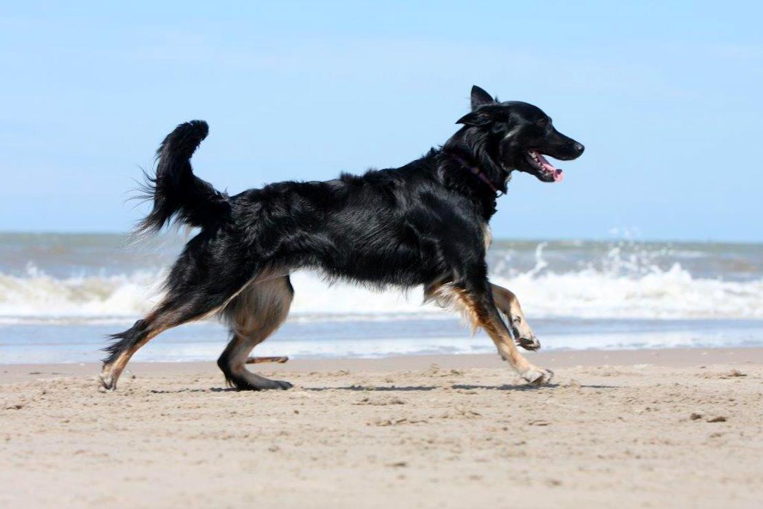 Norah op het strand (foto: Maud Velders)