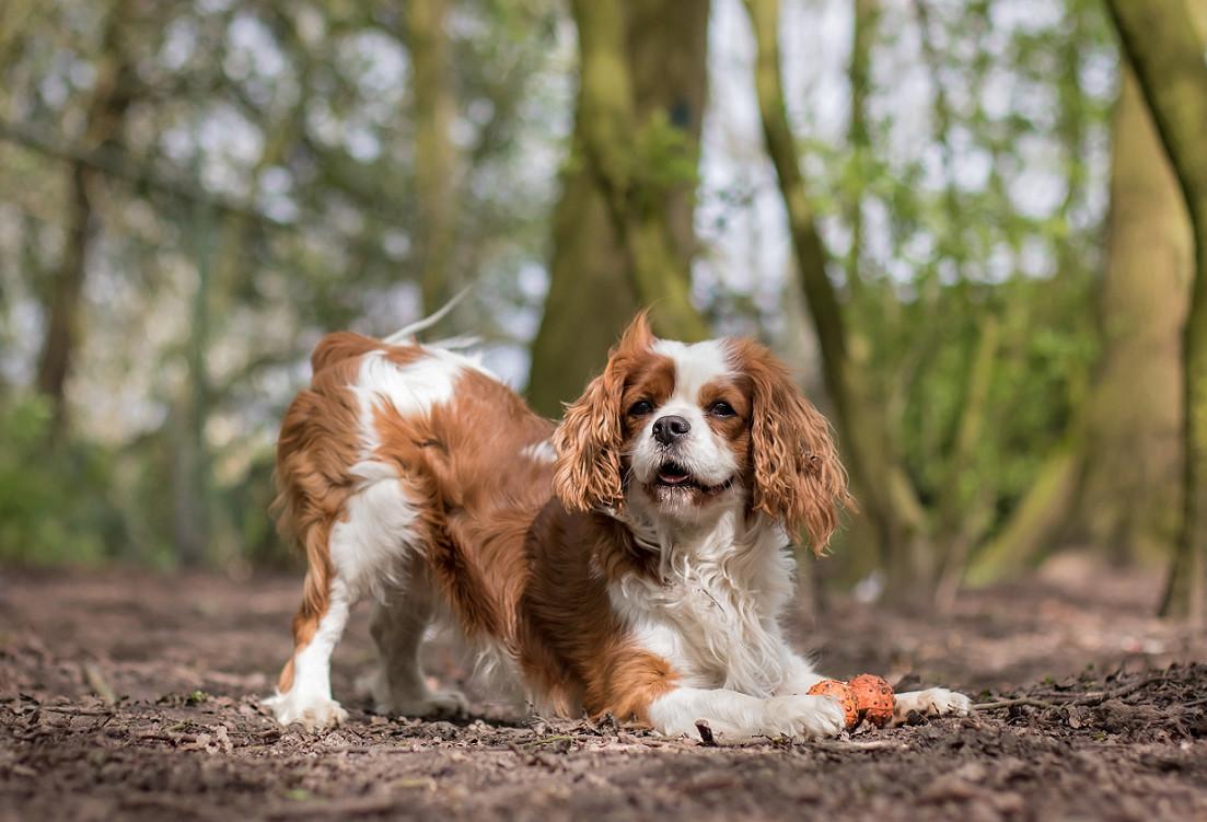 Wil je een hond aanschaffen? Ga dan naar een erkende opvang of erkende fokker.