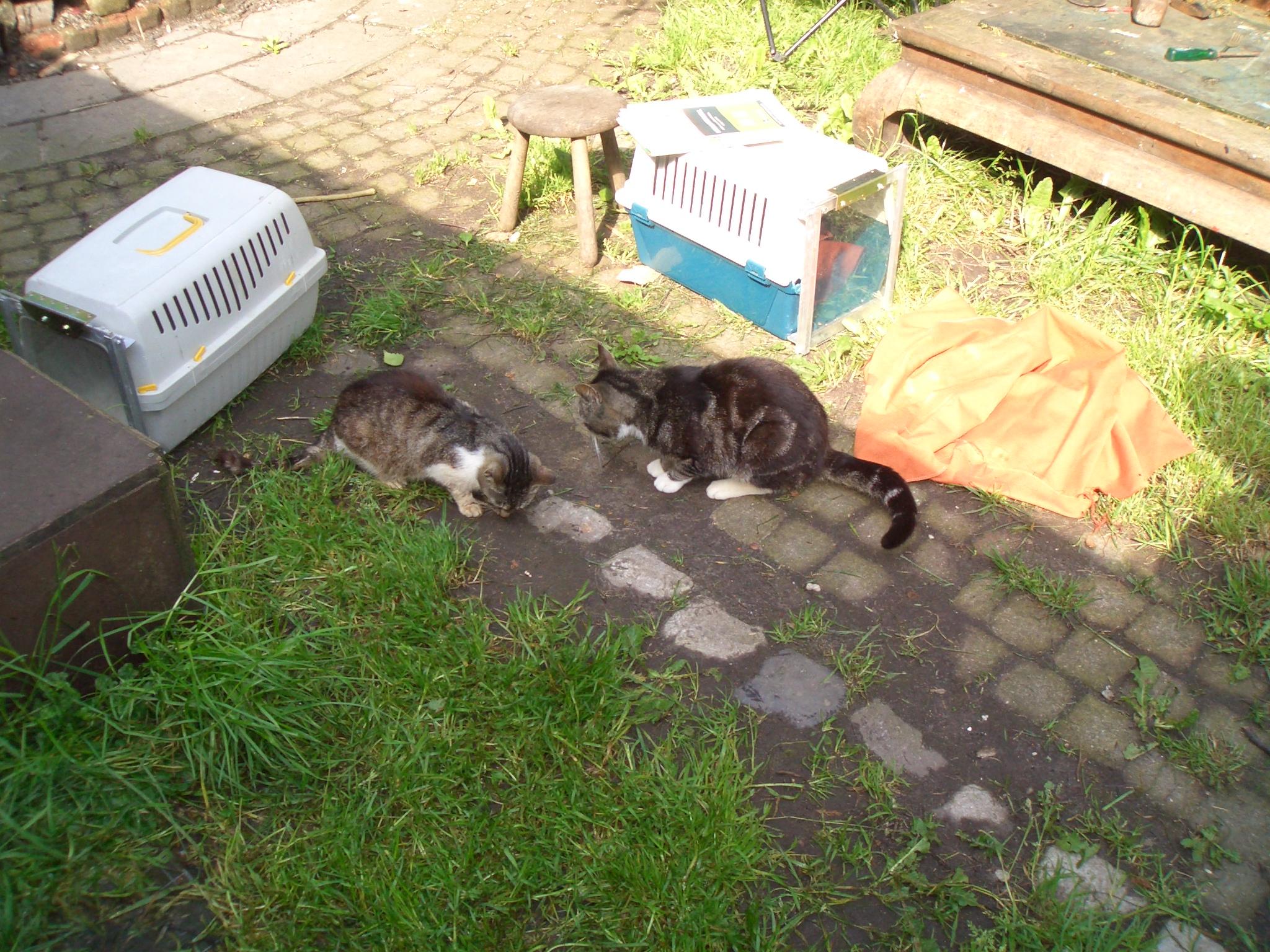 Verwilderde katten worden gevangen op een camping.