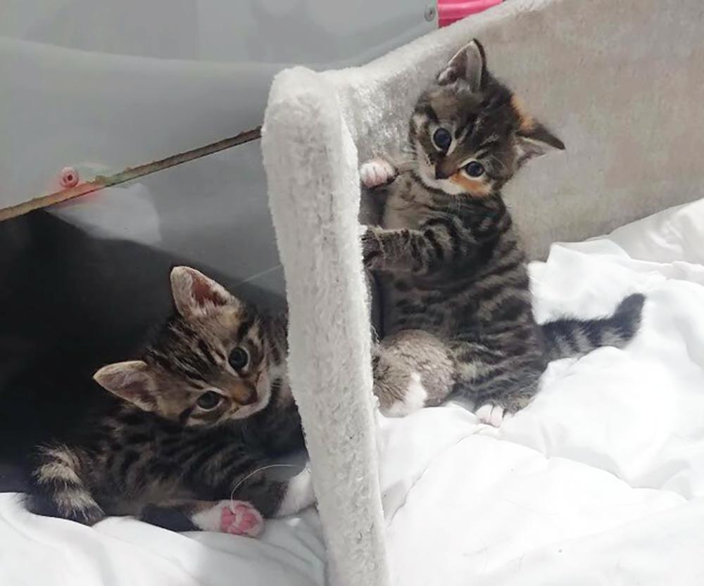 Kittens Selma en Salma van moederpoes Saar bij Dierentehuis Stevenshage in Leiden.