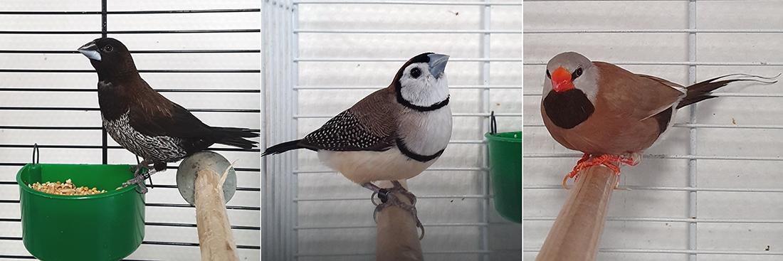 Bij Dierentehuis Stevenshage in Leiden vangen we ook tamme vogels op. Klik hier voor een overzicht van onze plaatsbare vogels.