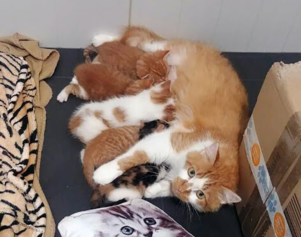 Kittens Miep Miep, Heng Heng, Vroem Vroem, Zjoef Zjoef en Tuut Tuut van moederpoes Toet Toet bij Dierentehuis Stevenshage in Leiden.