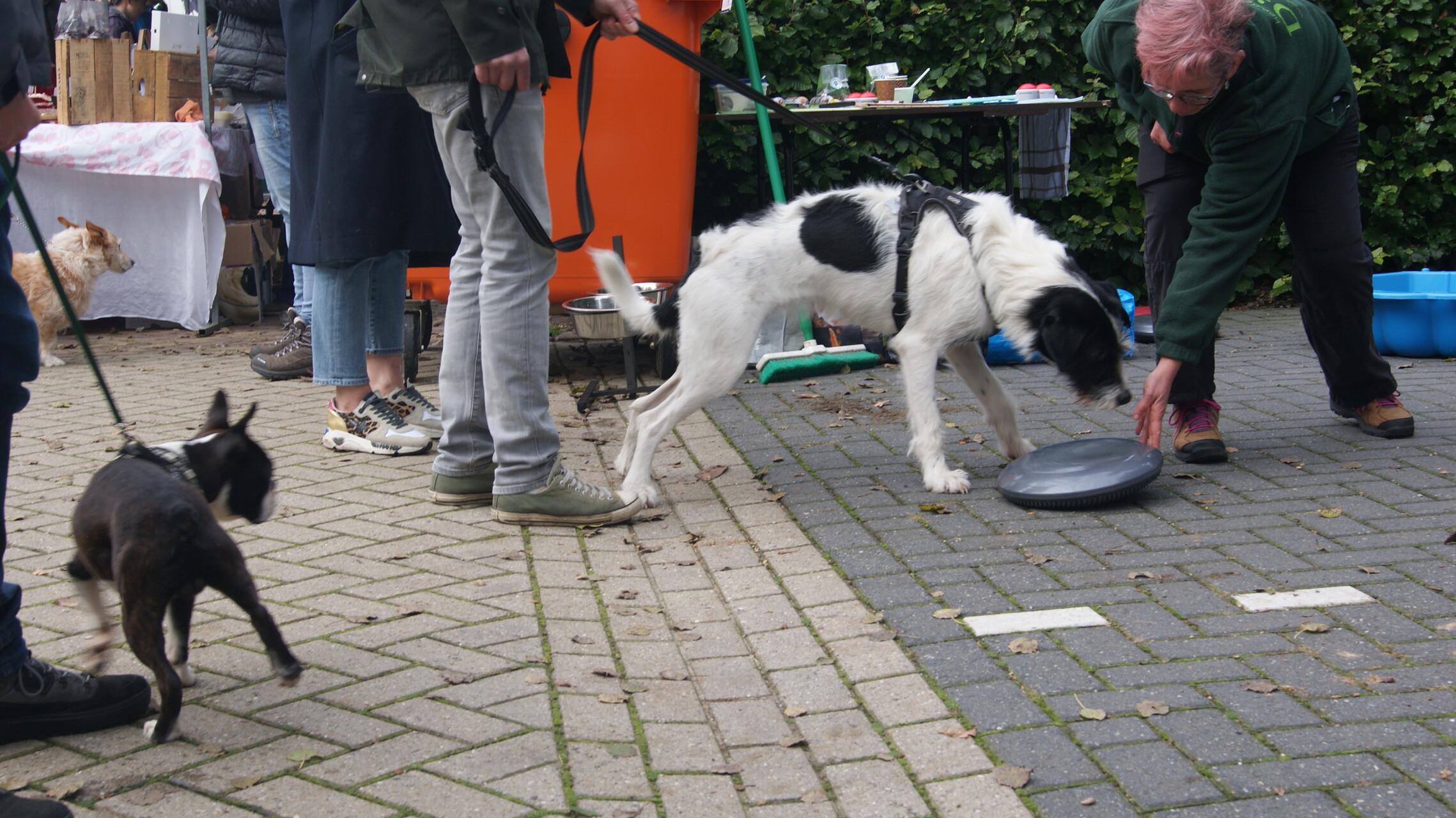 Honden en hun baasjes werden uitgedaagd tot hersenwerk tijdens de Open Asieldag van Dierentehuis Stevenshage in Leiden.